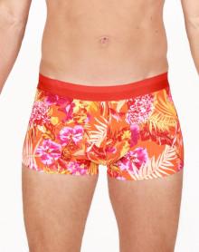Boxer HOM Equatorial (Orange)