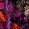 Soir iris